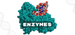 Enzyme Activity Assay Kit - Fast, Reliable